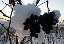 У Ниагарского водопада производится уникальное ледяное вино