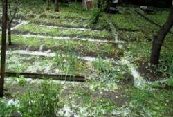 В Армении защищают виноградный урожай с помощью противоградовых сетей