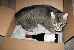 В Японии появилось вино для кошек