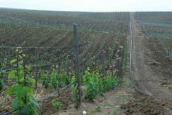 В Дагестане появятся новые виноградники