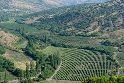 Российские инвесторы построят на Крымском полуострове завод по переработке винограда и производству игристых вин