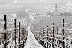 Молдавия: погодные условия могут нанести ущерб виноградникам