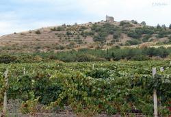 Украина: недостаток новых виноградников может привести к спаду в отрасли виноделия