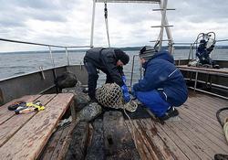 На дне Балтийского моря найдена бутылка с пригодным для питья с 200-летним джином