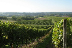 По итогам I полугодия 2014 года в Краснодарском крае выпущено на 7,1% больше вина