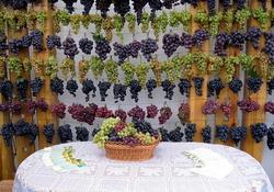 Молдавия: в нынешнем году будет собрано порядка 240 тыс. т технических сортов винограда
