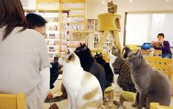 Во Франции появятся два бара, в которых можно будет насладиться обществом кошек