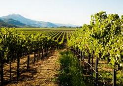 Украина: по итогам 2014 года объемы виноградного урожая сократились на 5,2%