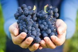 Частно-государственное партнерство: СРО виноградарей и виноделов