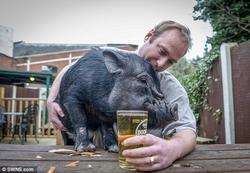 Карликовой свинье по имени Френсис Бэкон запретили выпивать в пабе